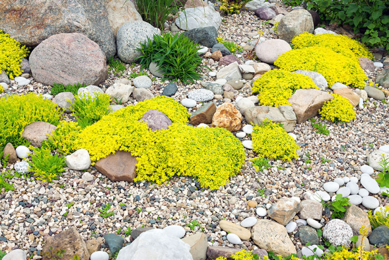 decorative rock garden
